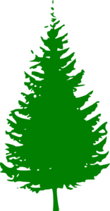 Pine clipart #14, Download drawings