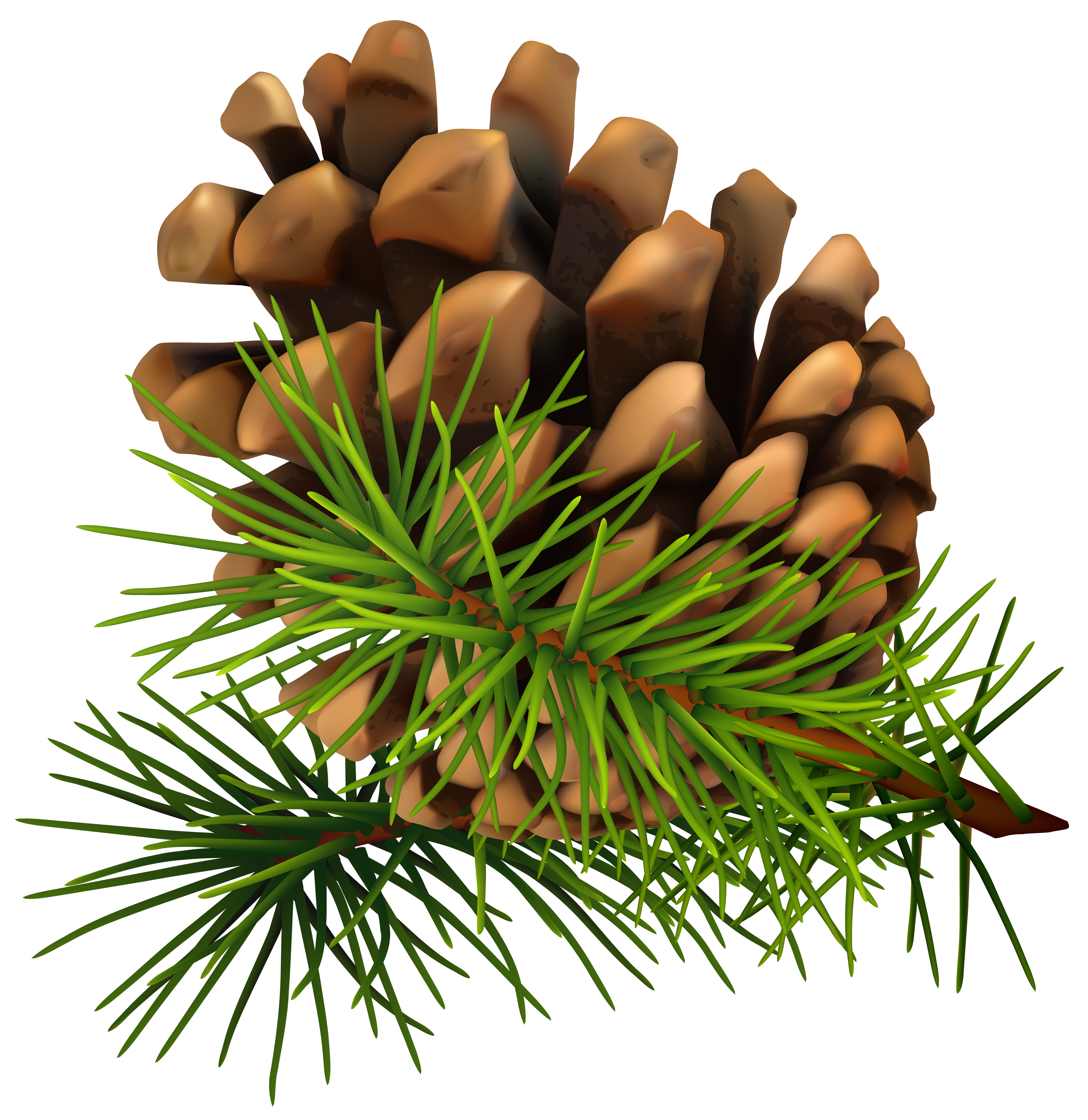 Pine clipart #3, Download drawings