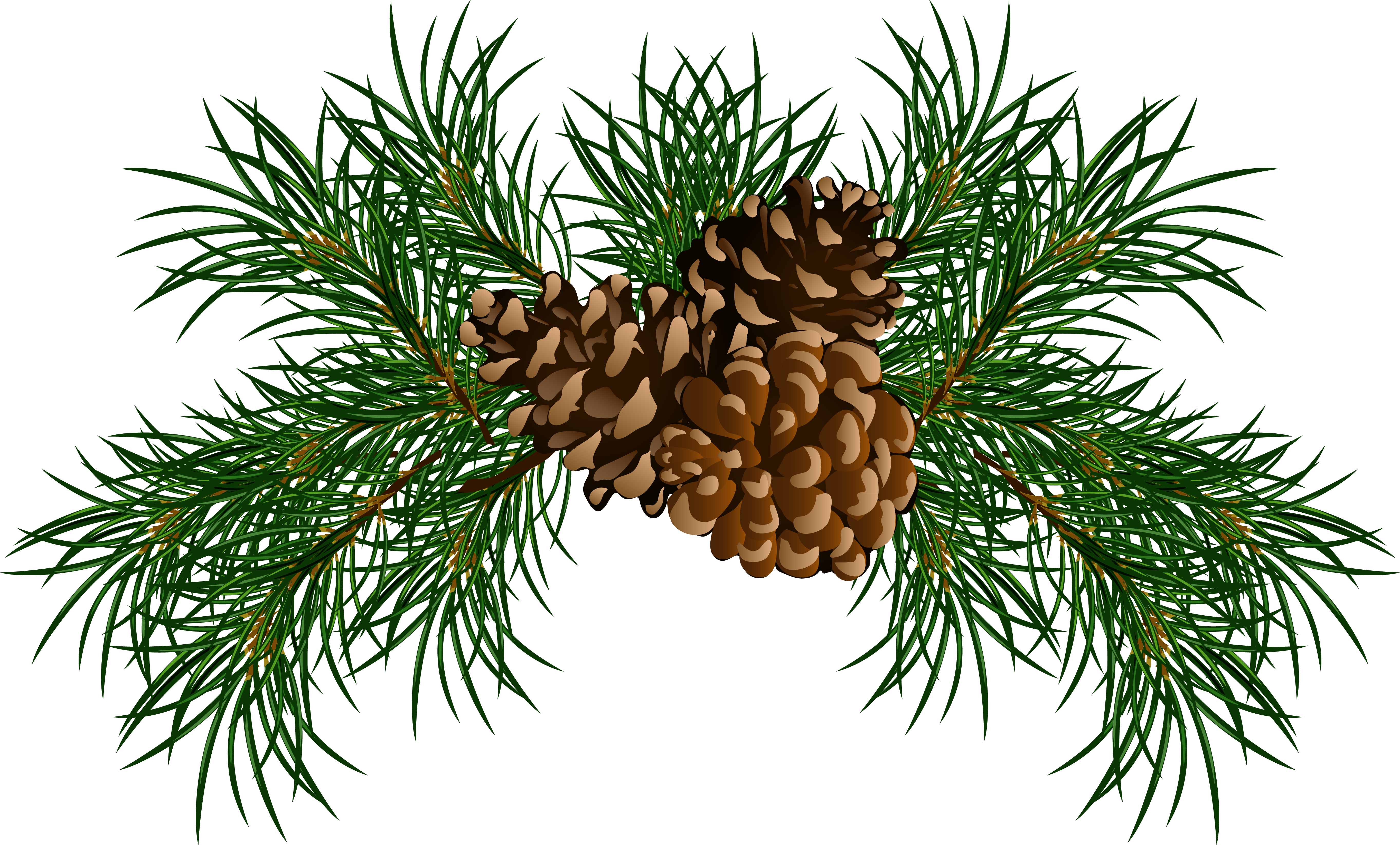 Pine clipart #4, Download drawings