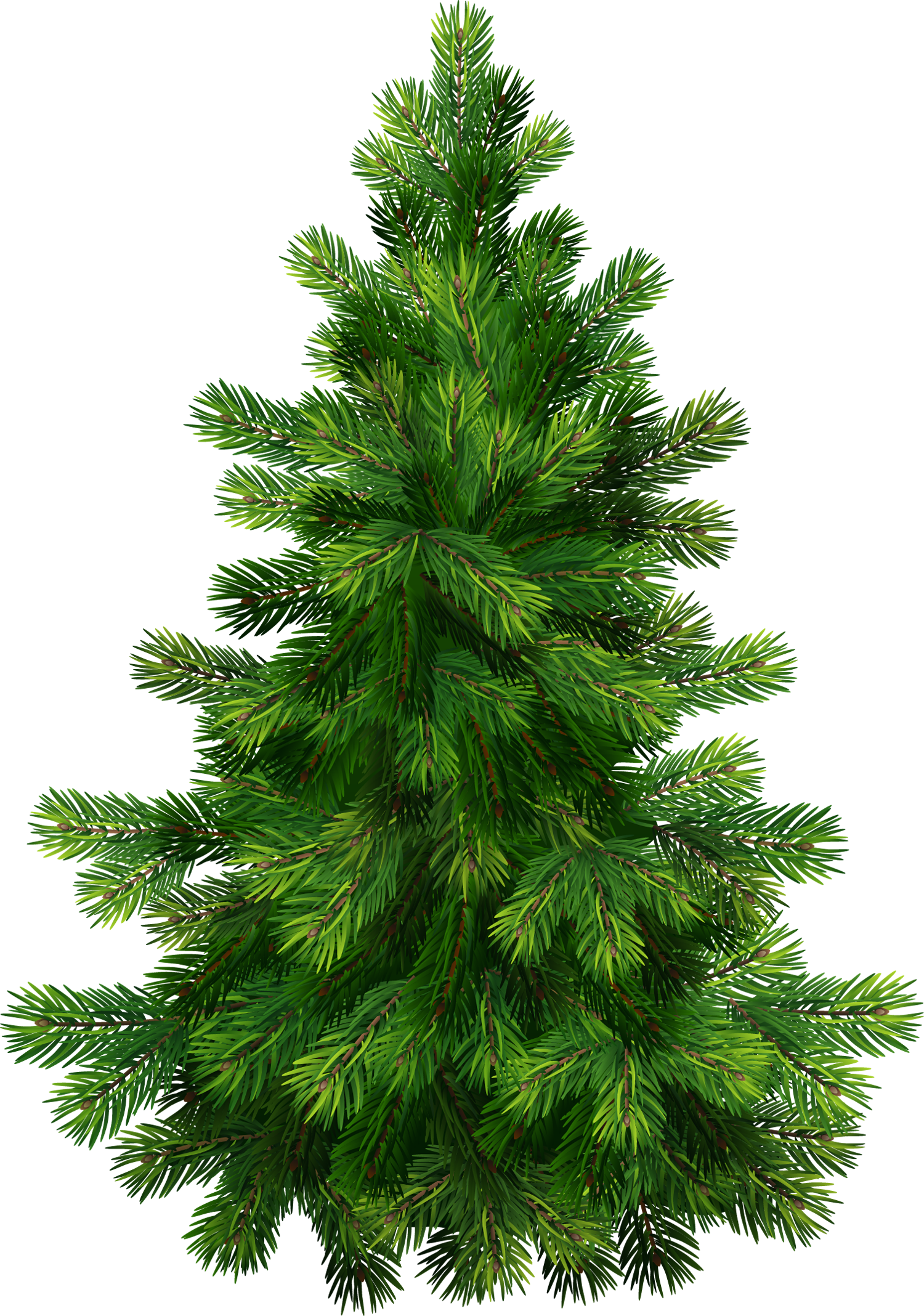 Pine clipart #2, Download drawings