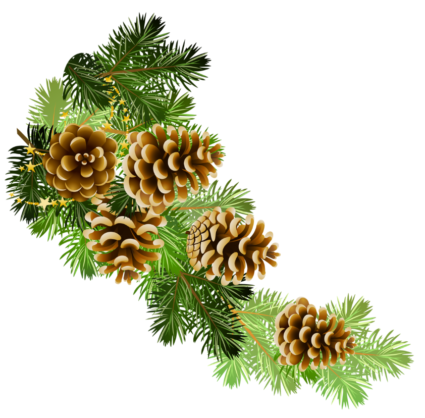 Pine Cone clipart #9, Download drawings