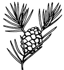 Pine Cone clipart #12, Download drawings