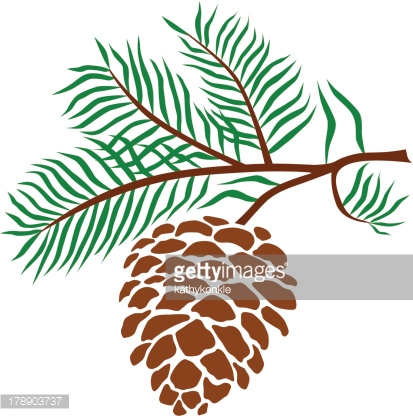 Pine Cone clipart #1, Download drawings