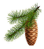 Pine Cone clipart #14, Download drawings