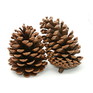 Pine Cone clipart #16, Download drawings