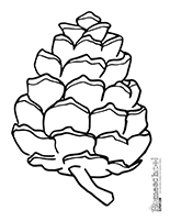 Pine Cone coloring #1, Download drawings