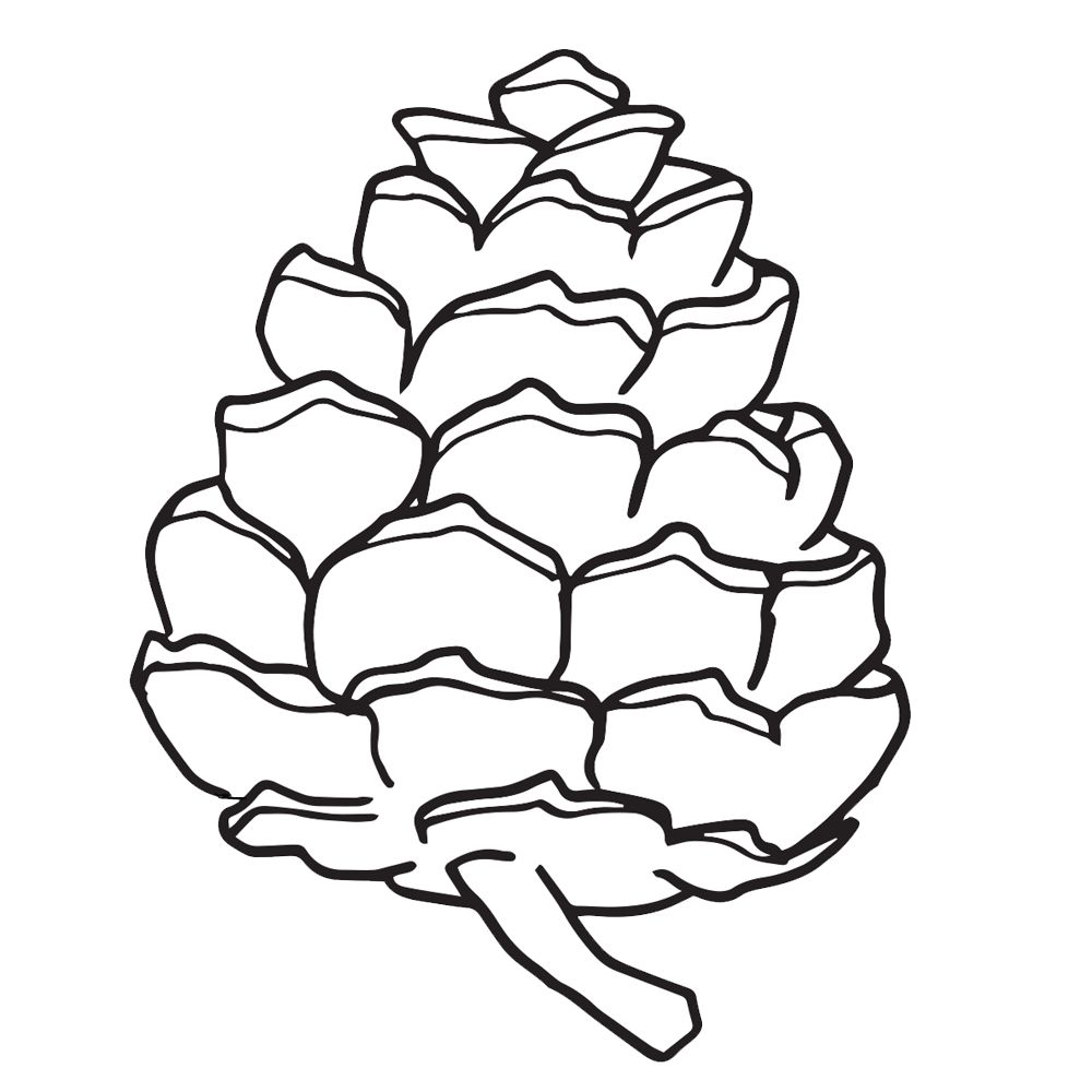Pine Cone coloring #11, Download drawings