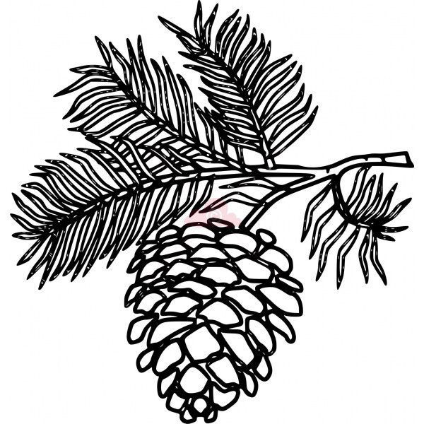 Pine Cone coloring #18, Download drawings