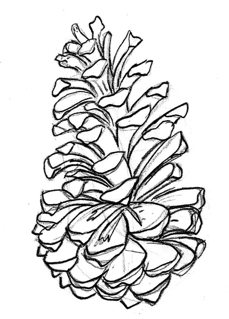 Pine Cone coloring #17, Download drawings