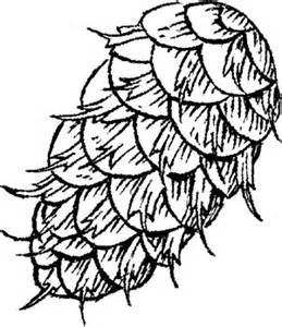 Pine Cone coloring #12, Download drawings