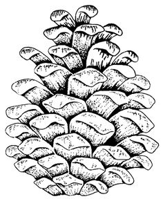 Pine Cone coloring #10, Download drawings