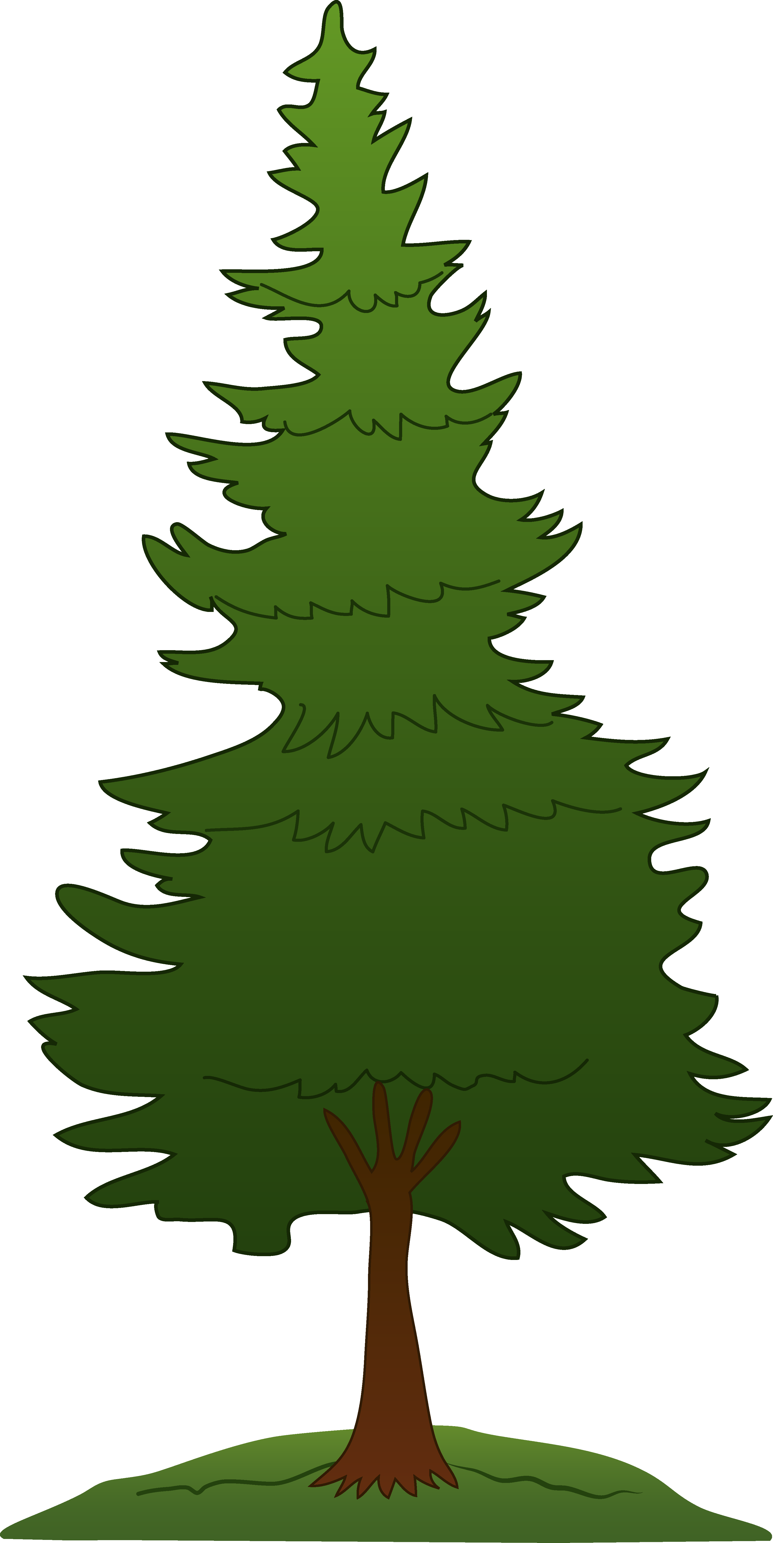 Douglas Fir Trees clipart #6, Download drawings
