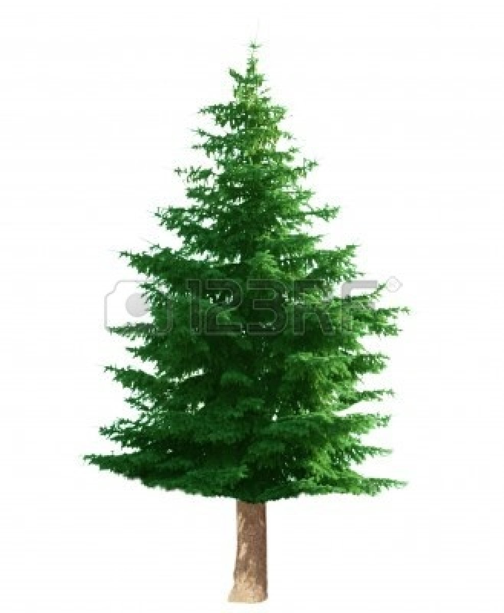 Pine Tree clipart #11, Download drawings