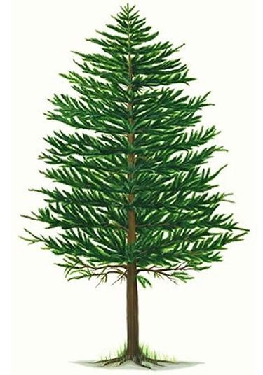 Pine Tree clipart #4, Download drawings