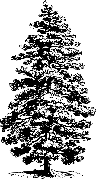 Pine svg #10, Download drawings