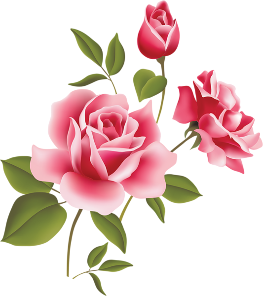 Pink Rose clipart #11, Download drawings