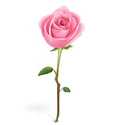 Pink Rose clipart #12, Download drawings