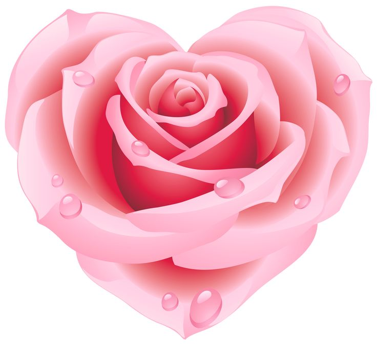 Pink Rose clipart #13, Download drawings