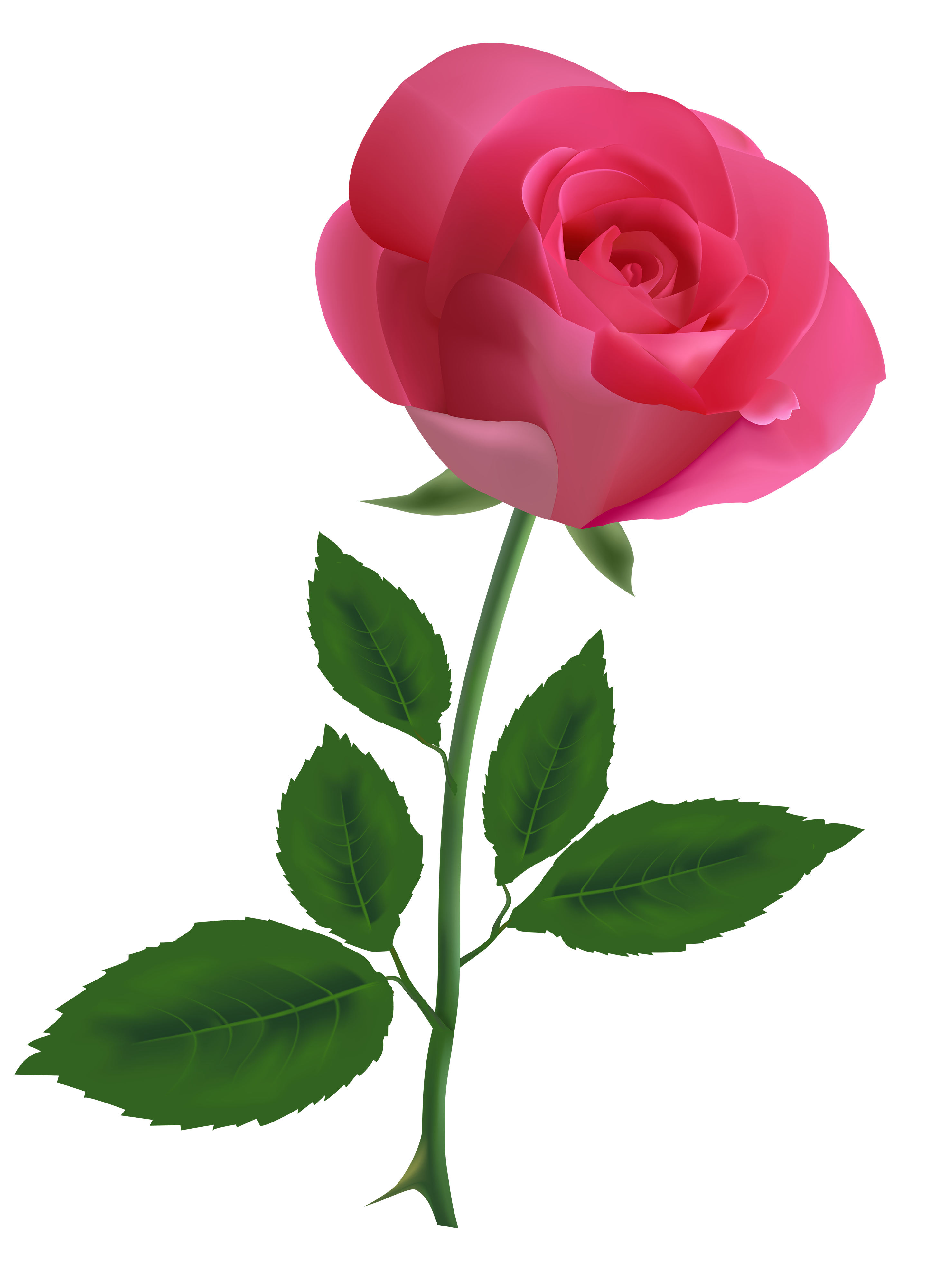 Pink Rose clipart #3, Download drawings