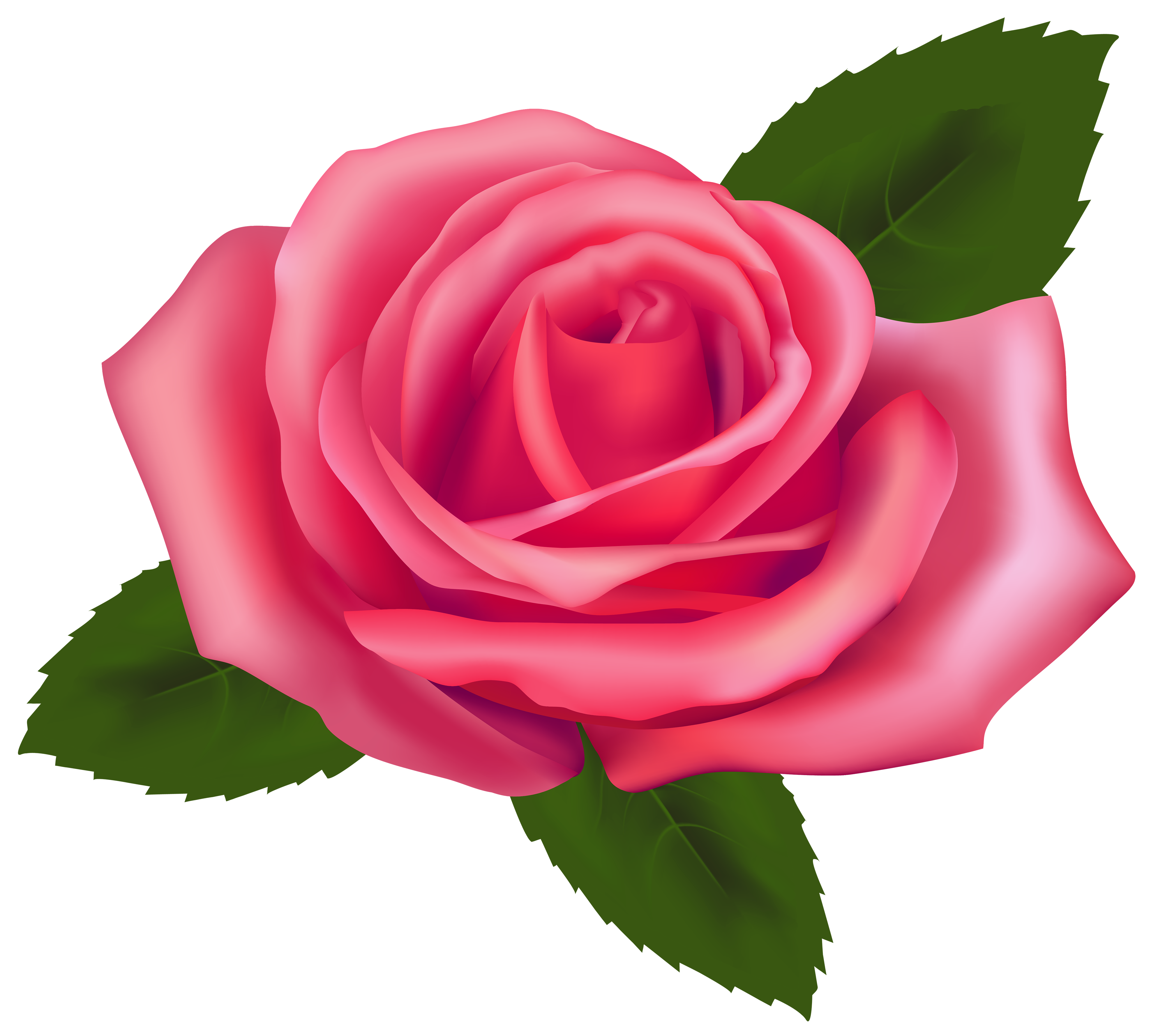 Pink Rose clipart #6, Download drawings