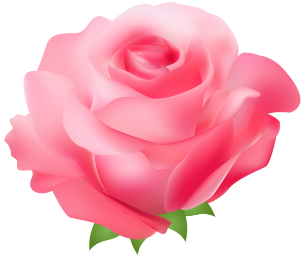 Pink Rose clipart #17, Download drawings
