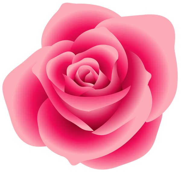 Pink Rose clipart #14, Download drawings
