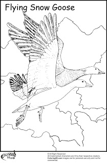 Pink-footed Goose coloring #13, Download drawings