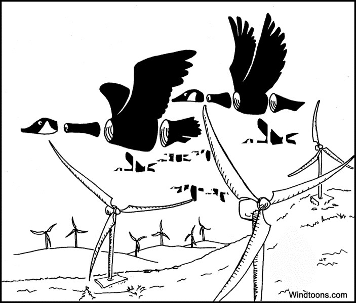 Pink-footed Goose coloring #2, Download drawings
