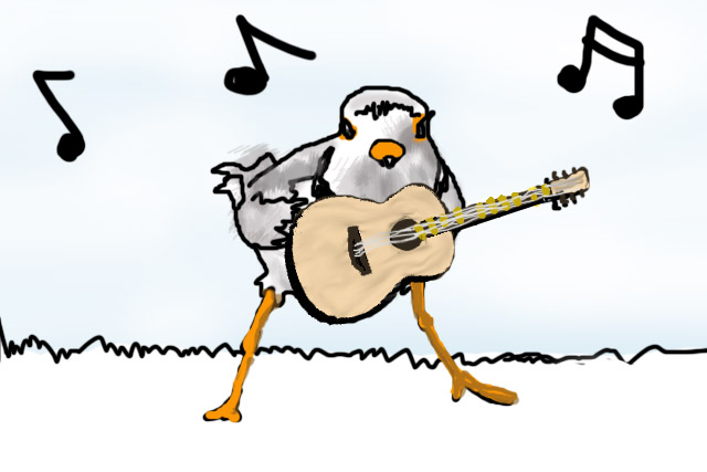 Piping Plover clipart #3, Download drawings
