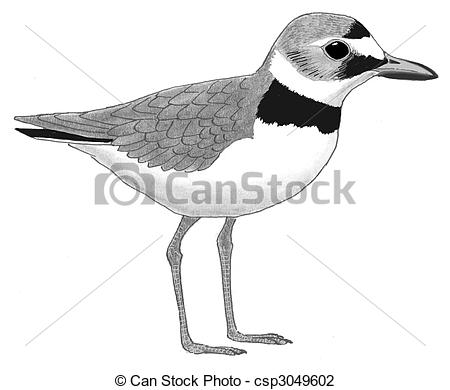 Plover clipart #14, Download drawings