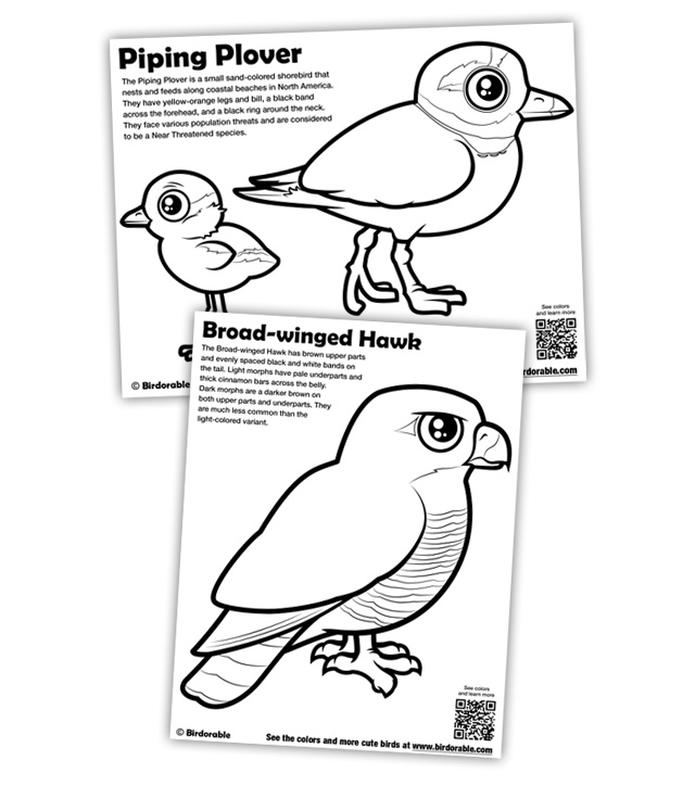 plover coloring  download plover coloring