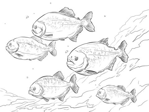Parana coloring #4, Download drawings