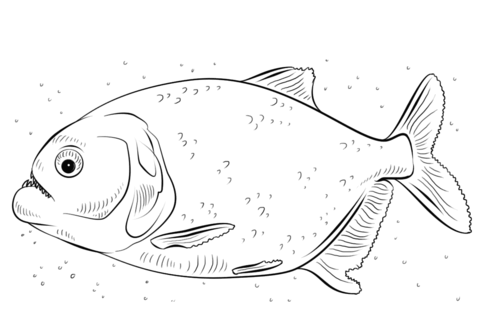 Download Piranha coloring for free - Designlooter 2020