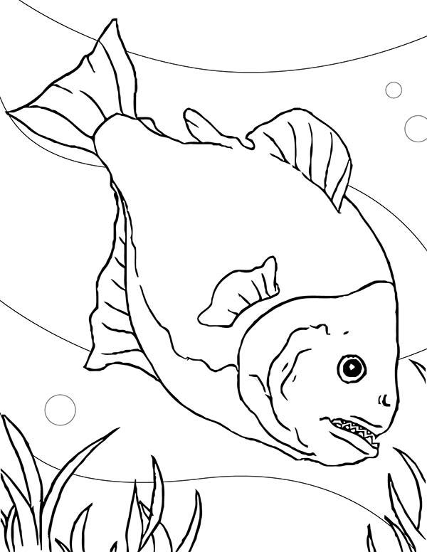 Parana coloring #16, Download drawings