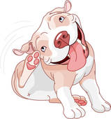 Pitbull clipart #10, Download drawings