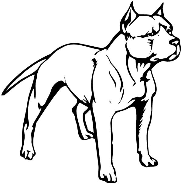 Pit Bull clipart #3, Download drawings