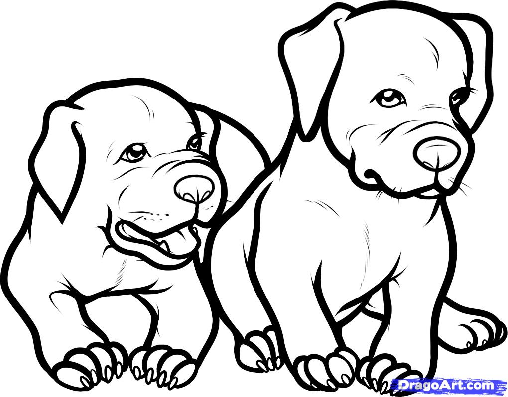 Pitbull coloring #5, Download drawings
