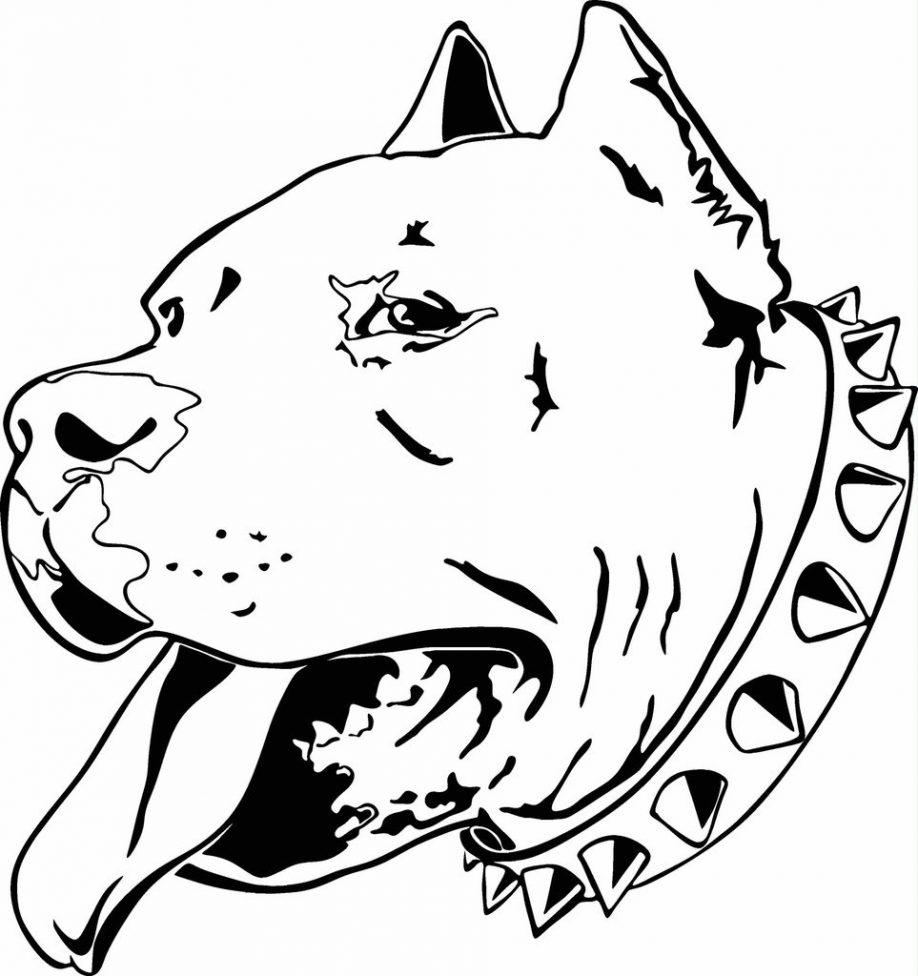 Pitbull coloring #14, Download drawings