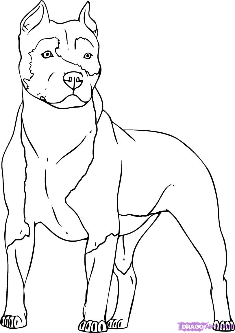 Pitbull coloring #3, Download drawings