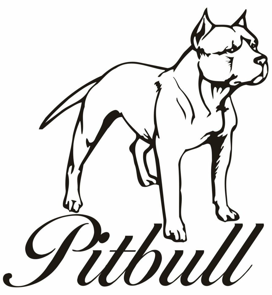 Pitbull coloring #8, Download drawings