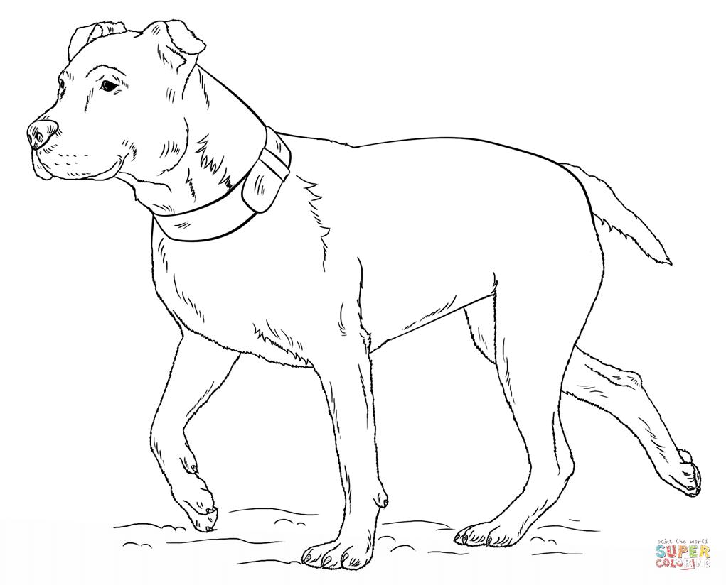 Pitbull coloring #3, Download drawings