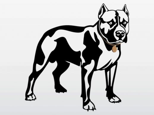 Pitbull svg #10, Download drawings