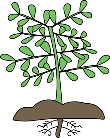 Plant clipart #14, Download drawings