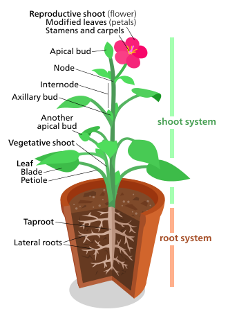 Plant svg #20, Download drawings