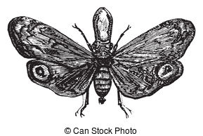 Planthopper clipart #10, Download drawings