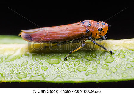 Planthopper clipart #5, Download drawings