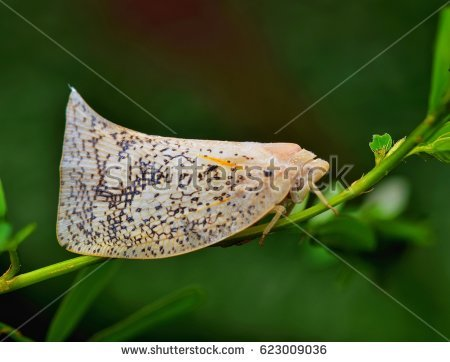 Planthopper clipart #6, Download drawings