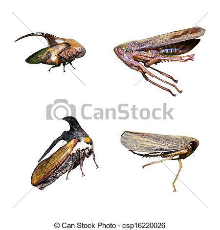 Planthopper clipart #19, Download drawings