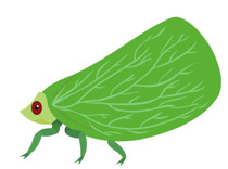 Planthopper clipart #20, Download drawings