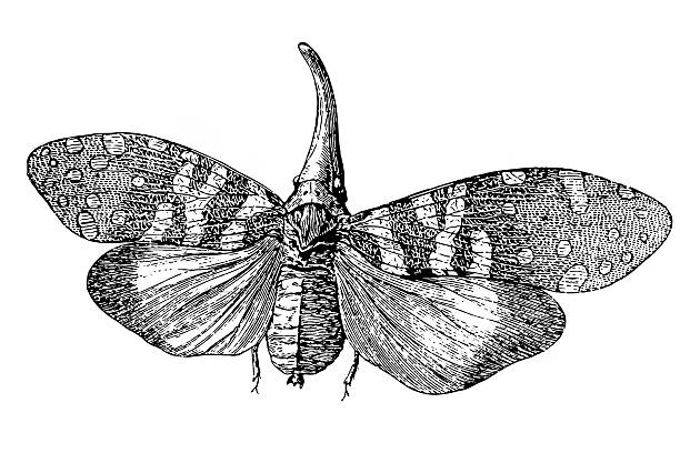 Planthopper clipart #16, Download drawings